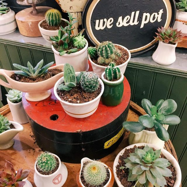 We sell potted plants newyorkcity
